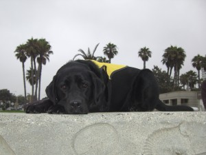 seeing guide dogs of america